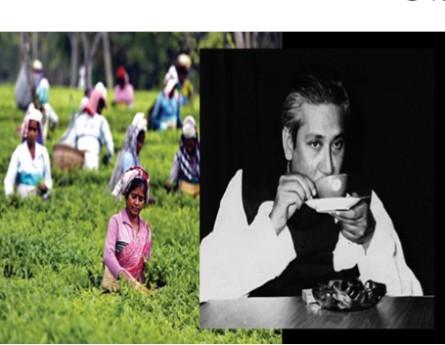 চা শিল্পের উন্নয়নে বঙ্গবন্ধুর অবদান ও বর্তমান সরকারের উদ্যোগ