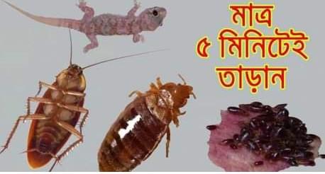 ৫ মিনিটে দূর করুন তেলাপোকা, ছারপোকা ও টিকটিকি